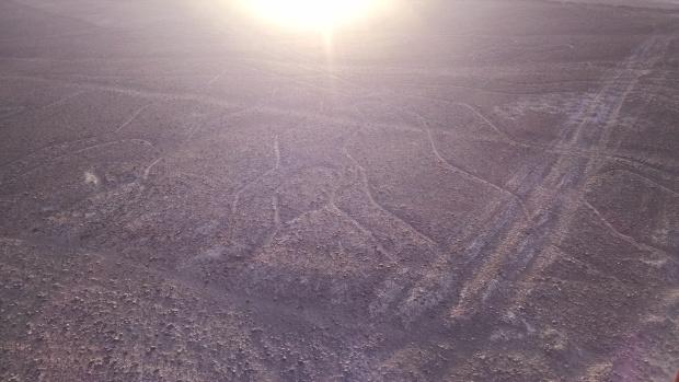 Nazca-QuinoaTree