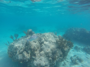 While not quite a full reef, the coral close to shore makes for some great snorkeling.