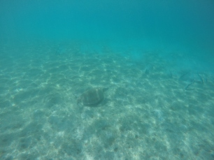 First turtle sighting of the trip!