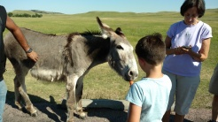 The begging burros. Ask, and the park rangers can show you where to find these guys. Bring some carrots or apples.